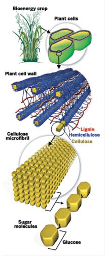 lignin strategy I