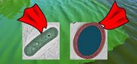 supercyanobacteria bioplastic